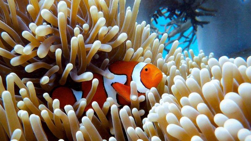 Do Clownfish Sleep? Amazing Sleeping Behavior Of Clownfish
