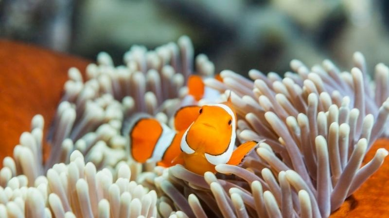 What To Feed Clownfish - 3 Good Foods