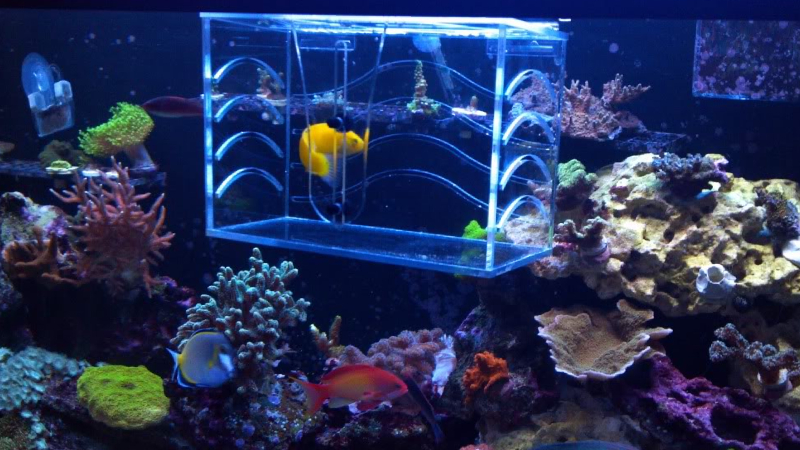 5 Important Things Should Know About Acclimating Clownfish
