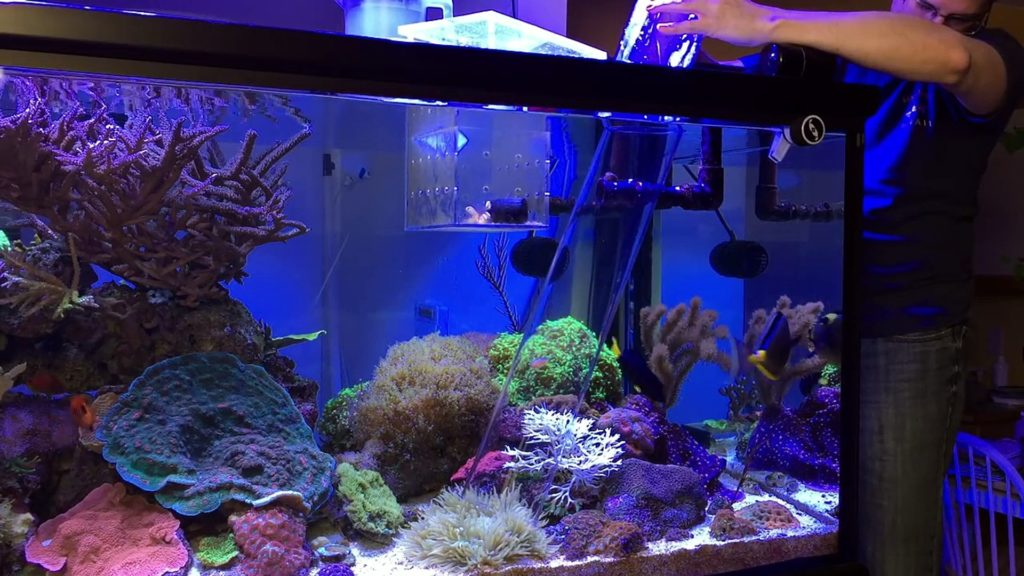 Adding clownfish to an anemone with a big clear pipe