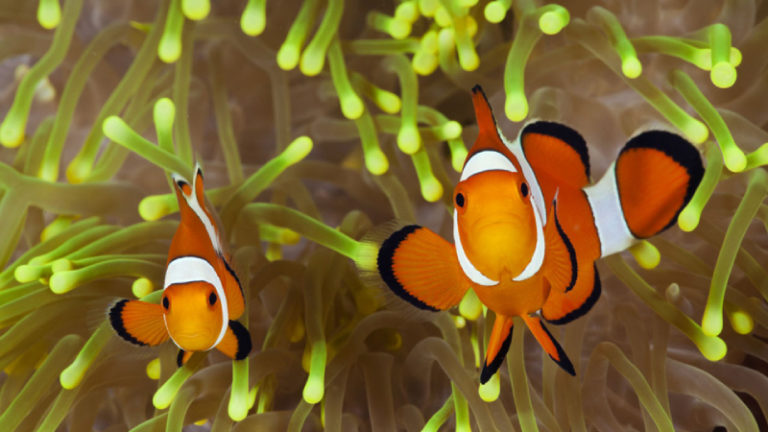 6 Things You Should Do To Deal With An Aggressive Clownfish