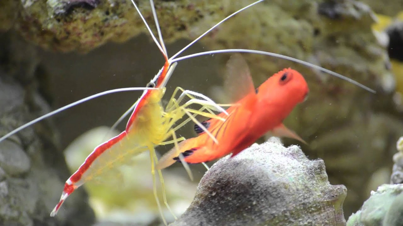 Can Shrimp Get Ich? Prevent This From Entering The Tank