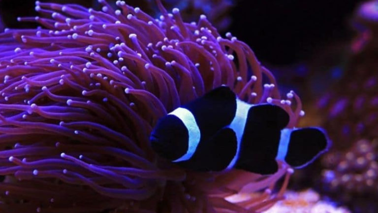 Top 3 Factors Influence Clownfish Growth Rate