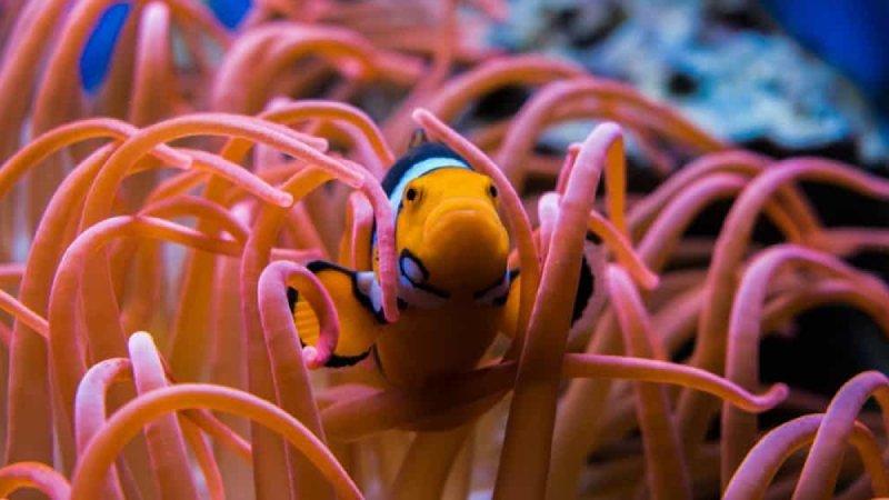 The Amazing World Of Clownfish Sleeping (Top 5 Secrets)