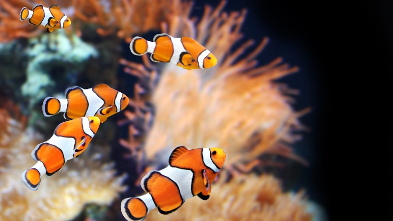 Best Clownfish Water Temperature And 4 Influencing Factors