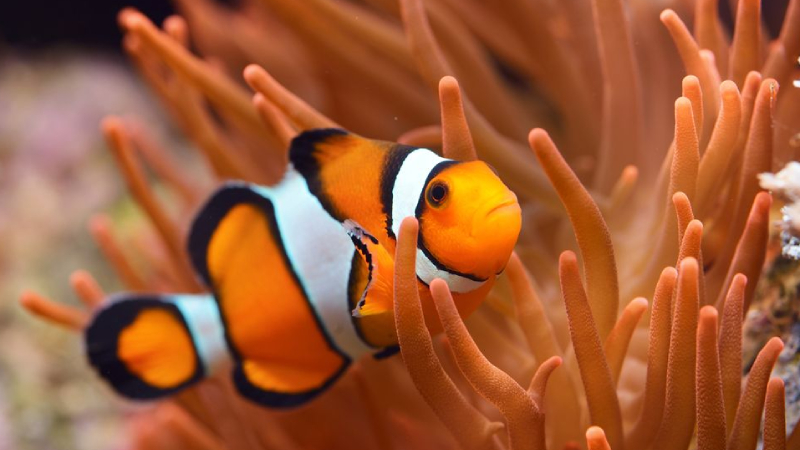 5 Most Beautiful And Easy Anemone For Clownfish