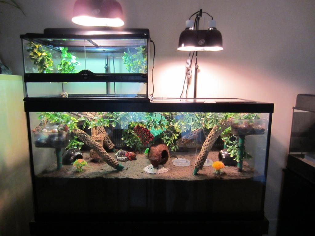 Hermit Crabs Tank