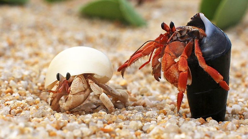 How Many Hermit Crabs Per Gallon? (4 Questions To Decide)