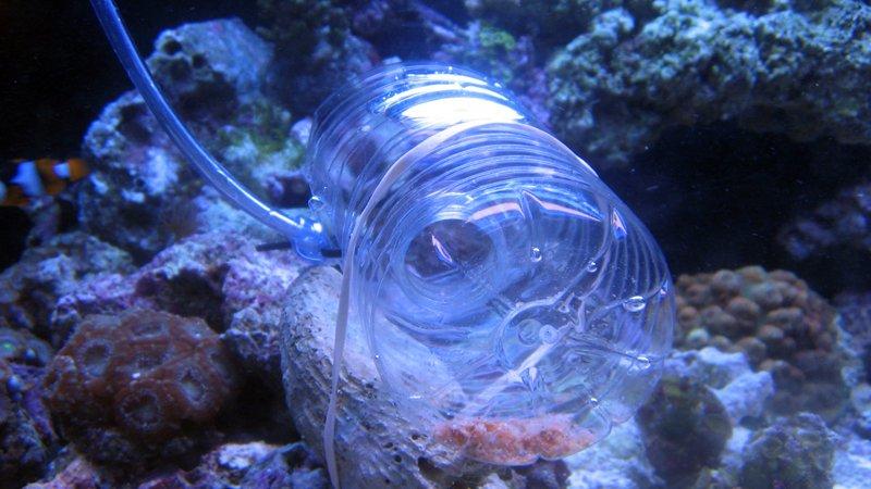How To Trap A Mantis Shrimp Successfully?