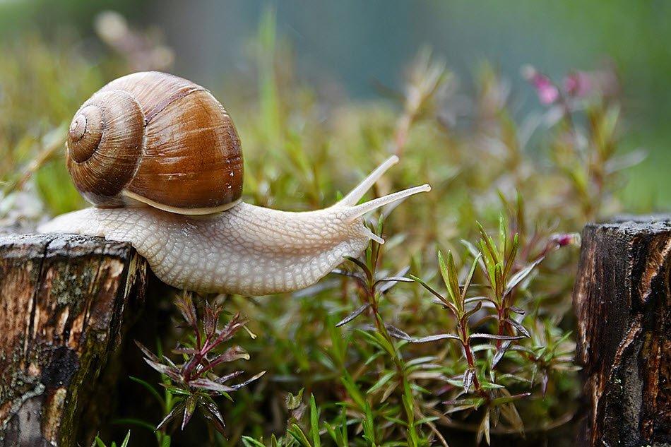 Introducing land snails