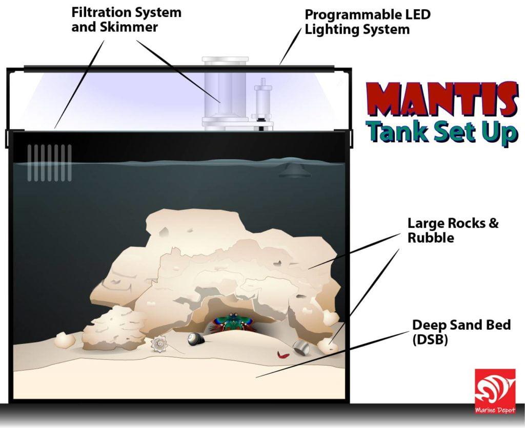 Mantis shrimp tank set up