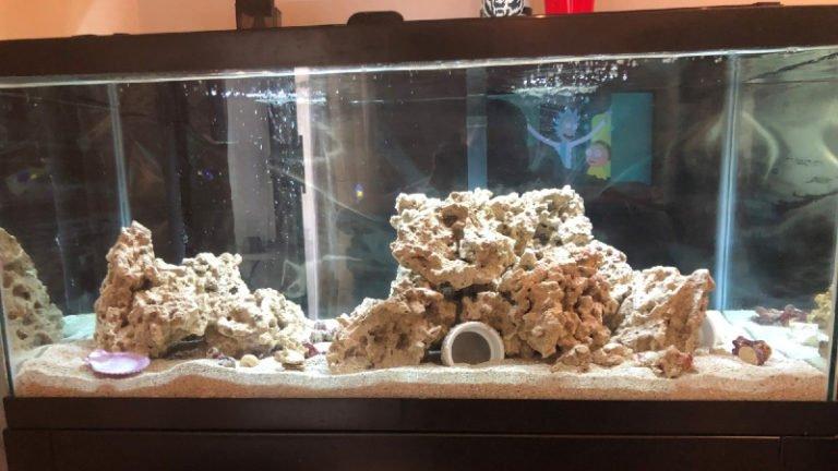 Mantis Shrimp Tank Size - How To Set Up A Suitable Tank?