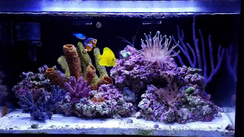 Is Raising Multiple Clownfish In One Tank Unbelievable?