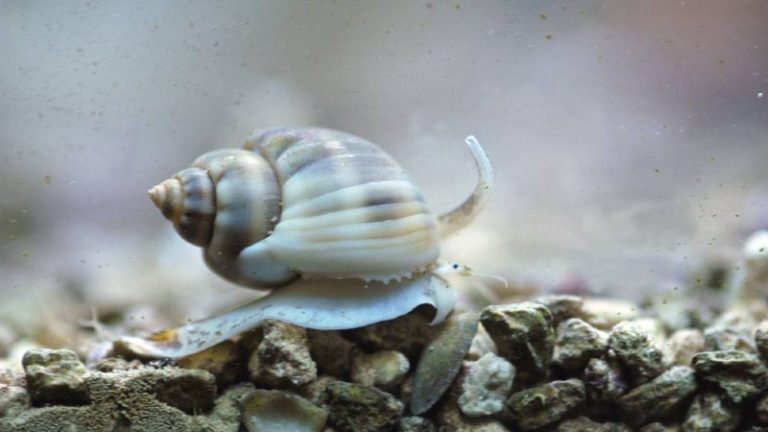 Will Nassarius Snail Eat Fish? - The Ultimate Feeding Guide