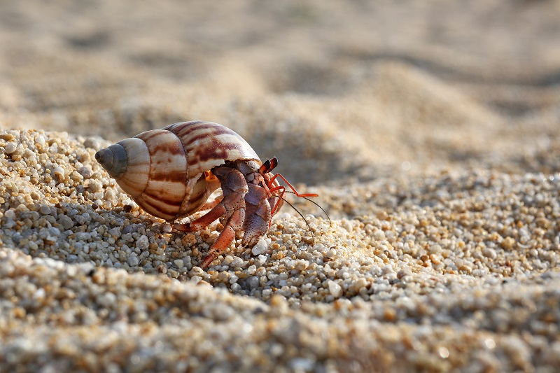 A hermit crab can kill a snail for the purpose of taking over the shell.