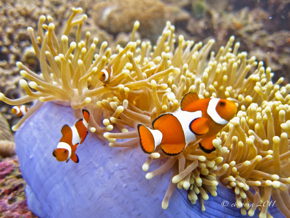 The Relationship Between The Clownfish