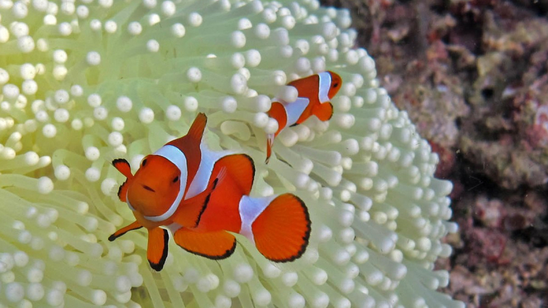 What do clownfish eggs look like? (Top 3 different facts)