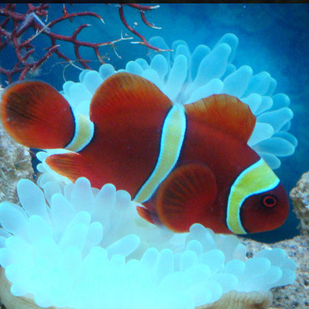 The white stripes will change into yellow when they are adults